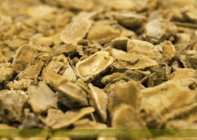 Algarrobo (Prosopis pallida)