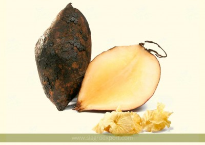 Yacon (Smallanthus sonchifolius)